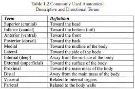 anatomical terminology worksheet anatomy and physiology body