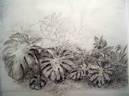 plant drawing studies bing images how to draw realistic trees