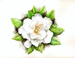17 gardenia flower meaning 茉莉花叶矢量图图片大全 茉莉花