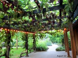 Arbor Trellis Plans Best 10 Grape Arbor Ideas On Pinterest Wisteria Arbor Wisteria