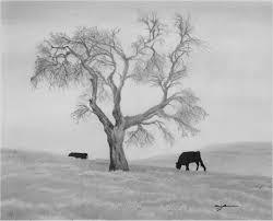 Oak Tree Drawing Lone Oak Tree Shades Of Graphite