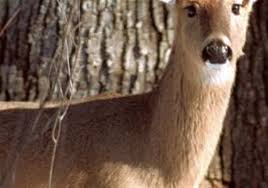 deer see the world differently than hunters have assumed for years