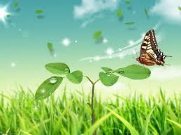 butterflies hq wallpapers download free butterflies hq hd