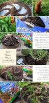 364 best outside plants containers images on pinterest gardening