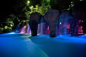 Backyard Swimming Pool Designs Swimming Pool Design Ideas Pool Tropical With Backyard Swimming