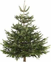 real christmas tree christmas decor