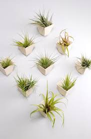 Air Plant Wall Holder 387 Best Plants U0026 Planters Images On Pinterest House Accessories