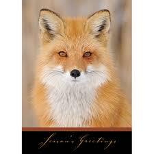 wildlife cards animal cards at shopnwf org