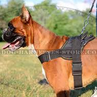 boxer dog uk best boxer harness for sports walking training uk store