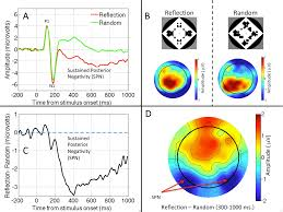 symmetry free full text brain activity in response to visual