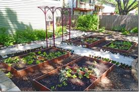how to grow a vegetable garden in low light good gone green