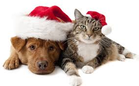 cute dog christmas wallpapers wallpaper of a cute christmas dog hd animals wallpapers