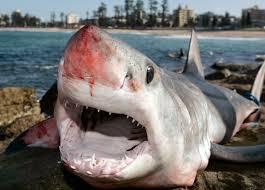 fewer shark bites in 2014 but florida still tops for attacks