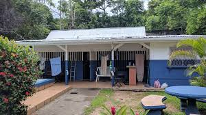 affordable house can u0027t stop the pura vida kruisin koru