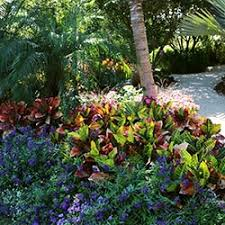 South Florida Landscaping Ideas South Florida Gardening Guide Costa Farms