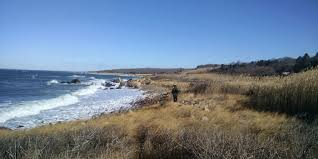 martha s vineyard birding on martha u0027s vineyard u2013 2016 annual bird count the