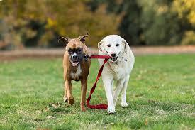 boxer dog training tips 8 tips for better dog photography