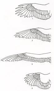 117 best eagle art images on pinterest eagle art hawks and red