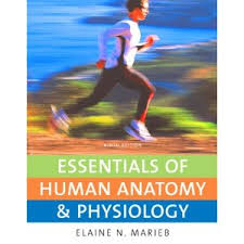 Human Physiology And Anatomy Pdf Essentials Of Human Anatomy And Physiology Simply Simple Human