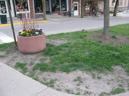 the grass on bridge square still lousy after all these years