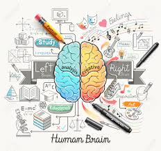 Human Brain Mapping Diagram Of The Human Brain And Functions Diagram Images Wiring