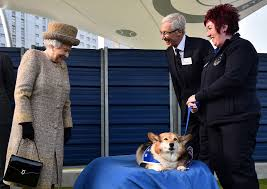 queen elizabeth adopts a new corgi whisper people com