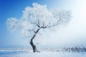 photo collection snow tree hd