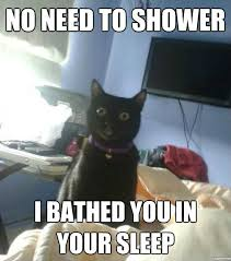 overly attached cat weknowmemes