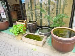a japanese container garden tended