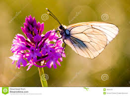 butterfly with flower stock image image of plant midi 10027331