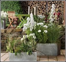 winterharte pflanzen balkon winterharte pflanzen für balkonkästen balkon hause dekoration