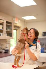 Veterinary Clinic Idaho Veterinary Internal 83 Best Veterinary Clinics That Pin Images On Pinterest Day Care