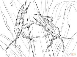 large milkweed bugs coloring page free printable coloring pages