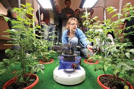 light requirements for growing tomatoes indoors lighting to growing indoor tomato garden 448 hostelgarden net