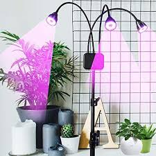 what is the best lighting for growing indoor the 15 best grow lights for your plants