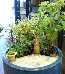 miniature garden plants secrets to success the mini garden guru
