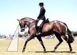 How To Tell If A Horse Is Blind Horsewyse U2013how Horses See