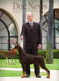 affenpinscher joey dog news sept 30 2011 by dn dog news issuu