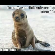 Baby Seal Meme - seals dog mermaids it all makes sense now sayings full of