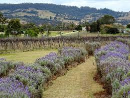 brisbane u0027s backyard a special vineyard on the scenic rim wine trail