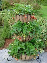 best 25 strawberry planters ideas on pinterest strawberry