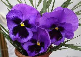 different types of purple imposing decoration types of purple flowers types of purple flower