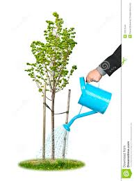 businessman watering tree stock images image 15615544