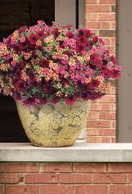 422 best gardening ideas images on pinterest flower gardening