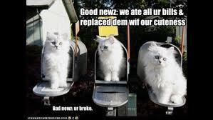 cute cat photos with captivating captions wsb tv