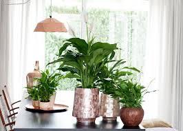 Designer Esstisch Kaleidoskop Effekte Zimmerpflanze Blumenbüro Holland Newsroom Part 3
