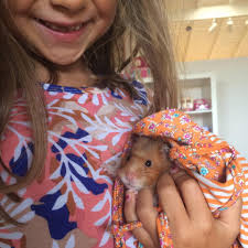 do hamsters make good pets for kids brie brie blooms