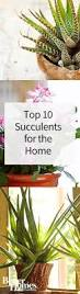 succelents top 10 succulent plants for the home
