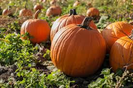 spirit halloween deptford nj lite rock 96 9 u2013 the best variety of the 80 u0027s 90 u0027s and today