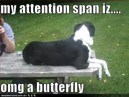 Border Collie Meme - 39 best border collies images on pinterest animal beautiful and